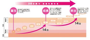 肌のターンオーバーも年齢が関係する!年齢に合った対処方法が大切!
